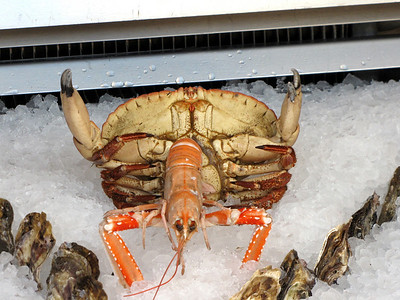 Not sure what that Crab is doing to that poor Crayfish.....