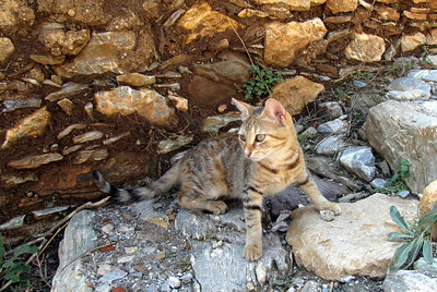 Kitten in Kastro