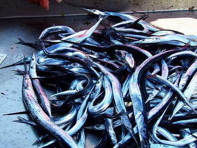 Fish market - Favignana Island
