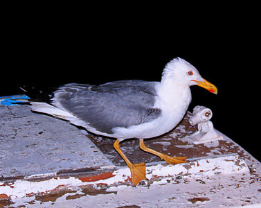 This seagull looks like he drank too much that night.