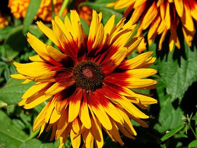 Flower in St. Raphael