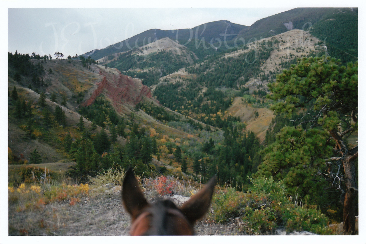 Ears of Kip the Quarter Horse I rode while at Eatons' Ranch, Wolf, Wyoming - Big Horn Mountains