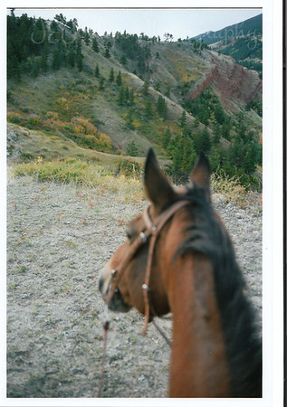 Kip the Quarter Horse I rode while at Eatons' Ranch, Wolf, Wyoming - Big Horn Mountains