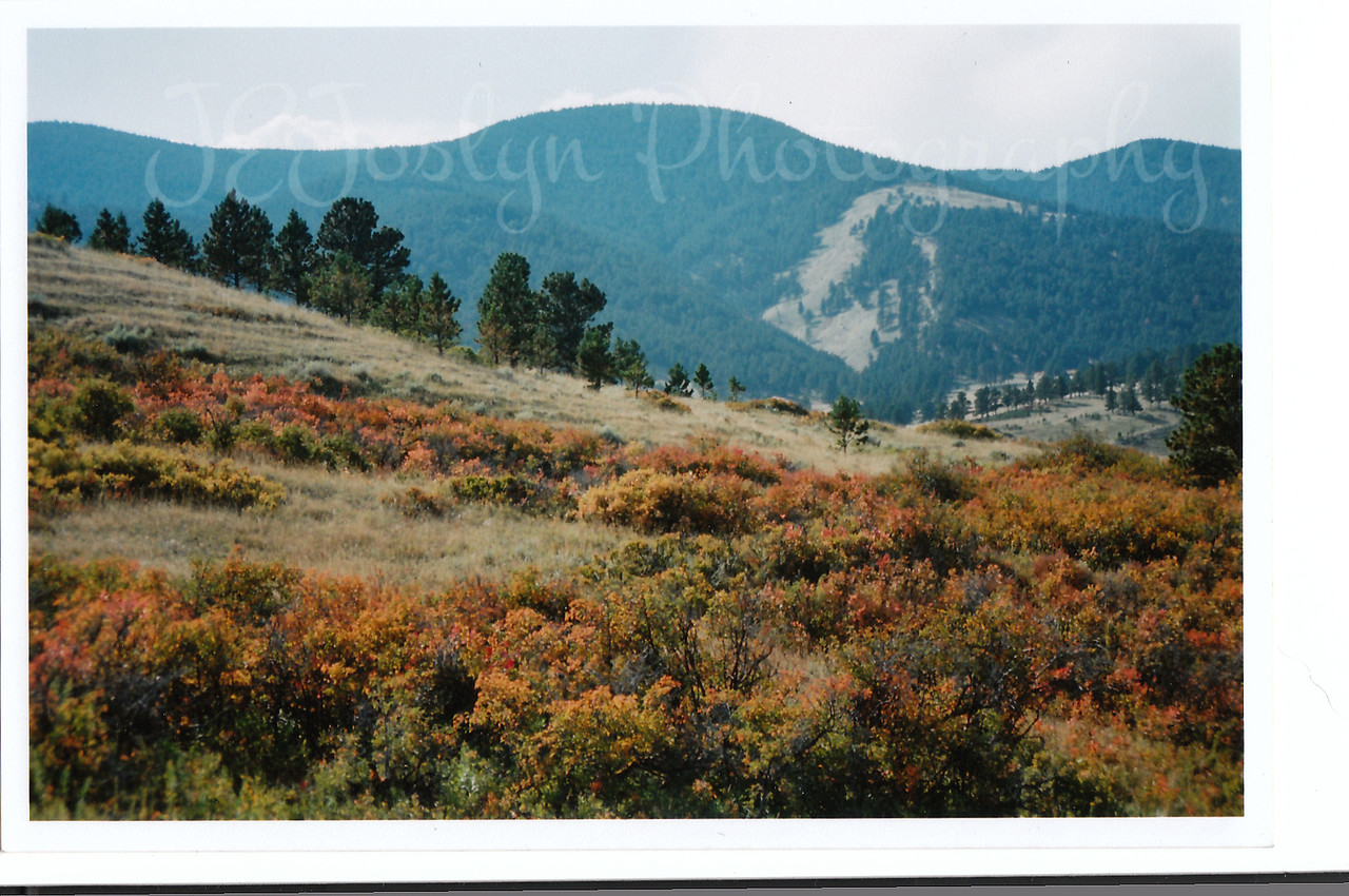 Fall colors at Eatons' Ranch, Wolf, Wyoming - Big Horn Mountains