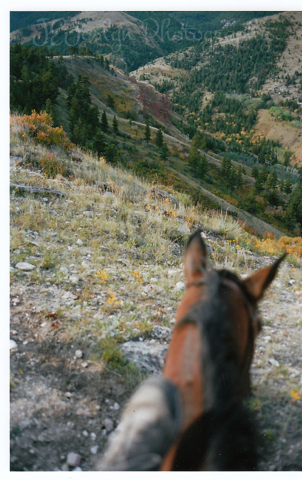 Proof - my foot, by Kips neck, while I was at Eatons' Ranch, Wolf, Wyoming - Big Horn Mountains