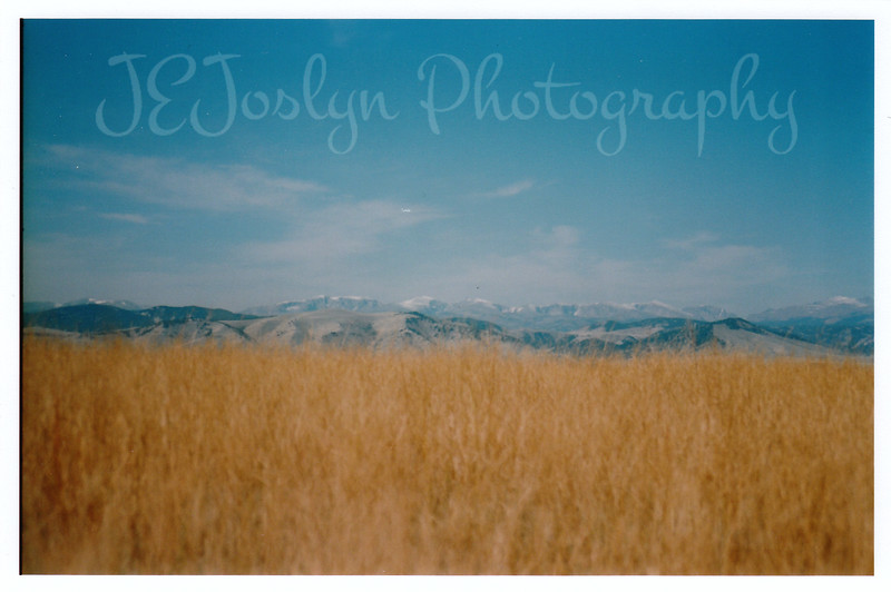 Fields in the fall, hosting the Big Horn Mountains from afar.  As I left Eatons' Ranch, this scene forced me to stop and watch.