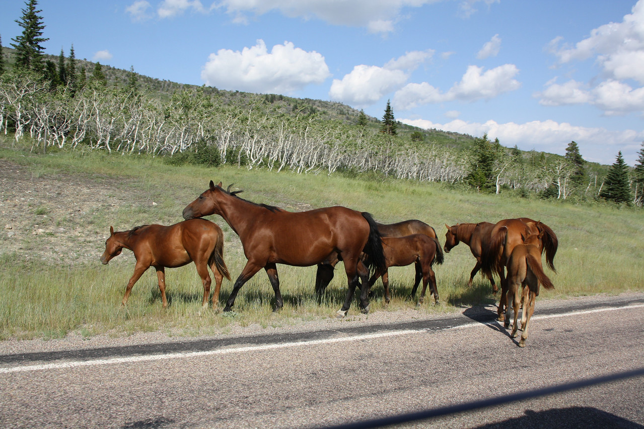 Open range on the Blackfeet Reservation, so these horses were trying to kick the RedBus off the highway.  The next day, on a horse ride with a Blackfeet guide, and actually ran into these horses, and he corralled them back into a fenced in area, as they had been missing for about three weeks.