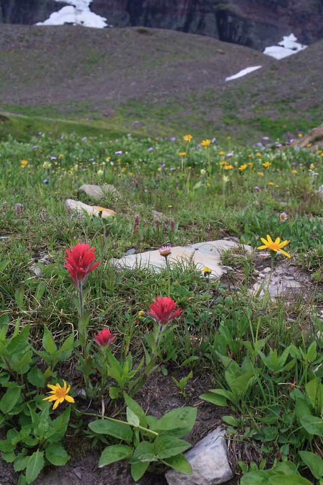 Glacier Park - Logan Pass structures.  Red flower is Indian PaintBrush  8-2009