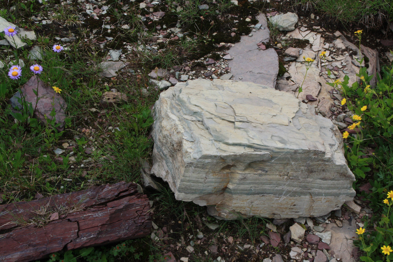 Glacier Park - Logan Pass structures, Appekunny argillite, or dull-green shale.   8-2009