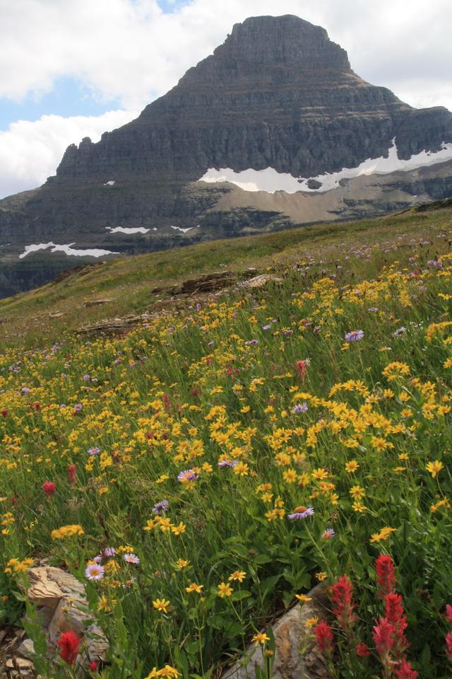 Glacier Park - Logan Pass structures.  Reynolds Mountain, 9125 ft    8-2009