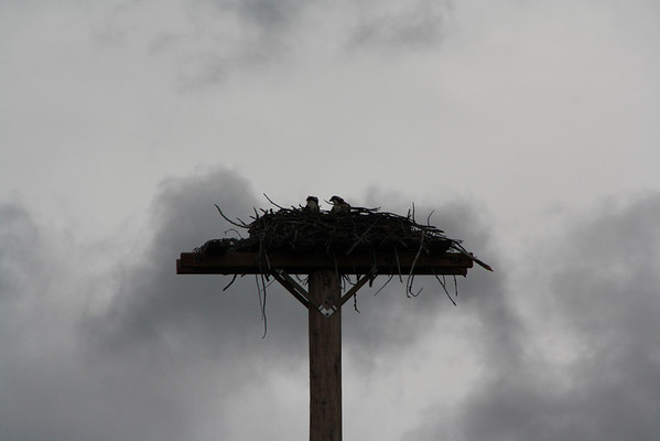 St. Mary's Visitor Center's Osprey and Swiftcurrent Area