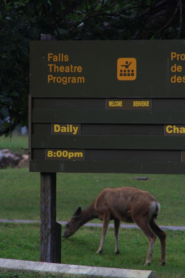 Glacier Park.  Red Bus Tour to Waterton, Alberta, Canada, Waterton Glacier International Peace Park.   8-2009