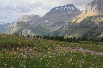 Glacier Park - Logan Pass structures.   8-2009    Purple Aster, Greenthread (yellow) and Los Alamos Buttercup.  The mountains have their own names, but the look of these also has a name, The Garden Wall, named by earlier visitors.