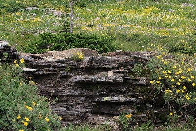 Glacier Park - Logan Pass structures, and more of those lovely yellow buttercups.   8-2009