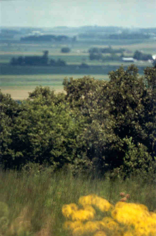 Landscape while on Buffalo Ridge, shows various prairie items, flowers, shrubs, even this hill, and the long expanse of land in front of you.  Aren't you glad you are not in a horse and buggy?