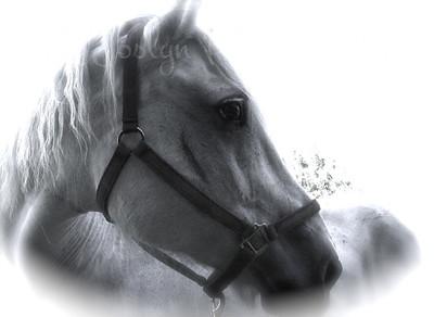 Jericho, Bunker horse, wonderful ride!