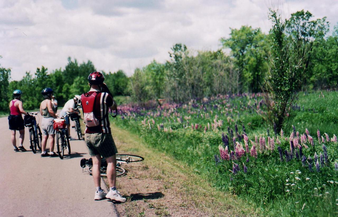 Flower Study - Bike Ride, June, 2006, Mesabi Trail, northern Minnesota