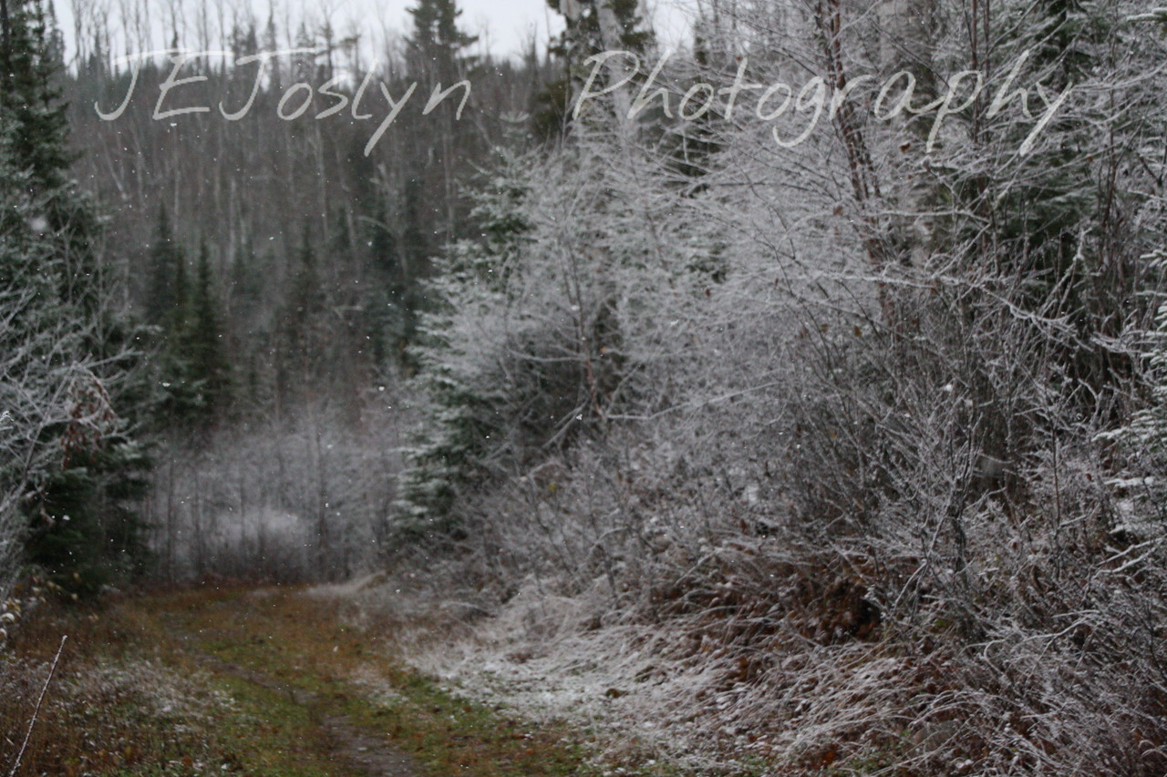 Gunflint Trail and Lodge area, Minnesota  October 30, 2009