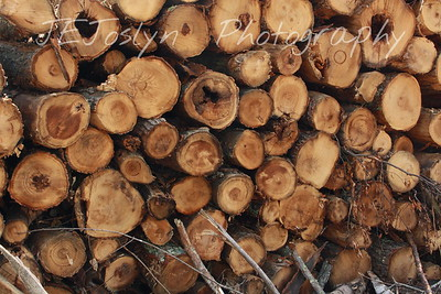 Lumber stacked in the woods.