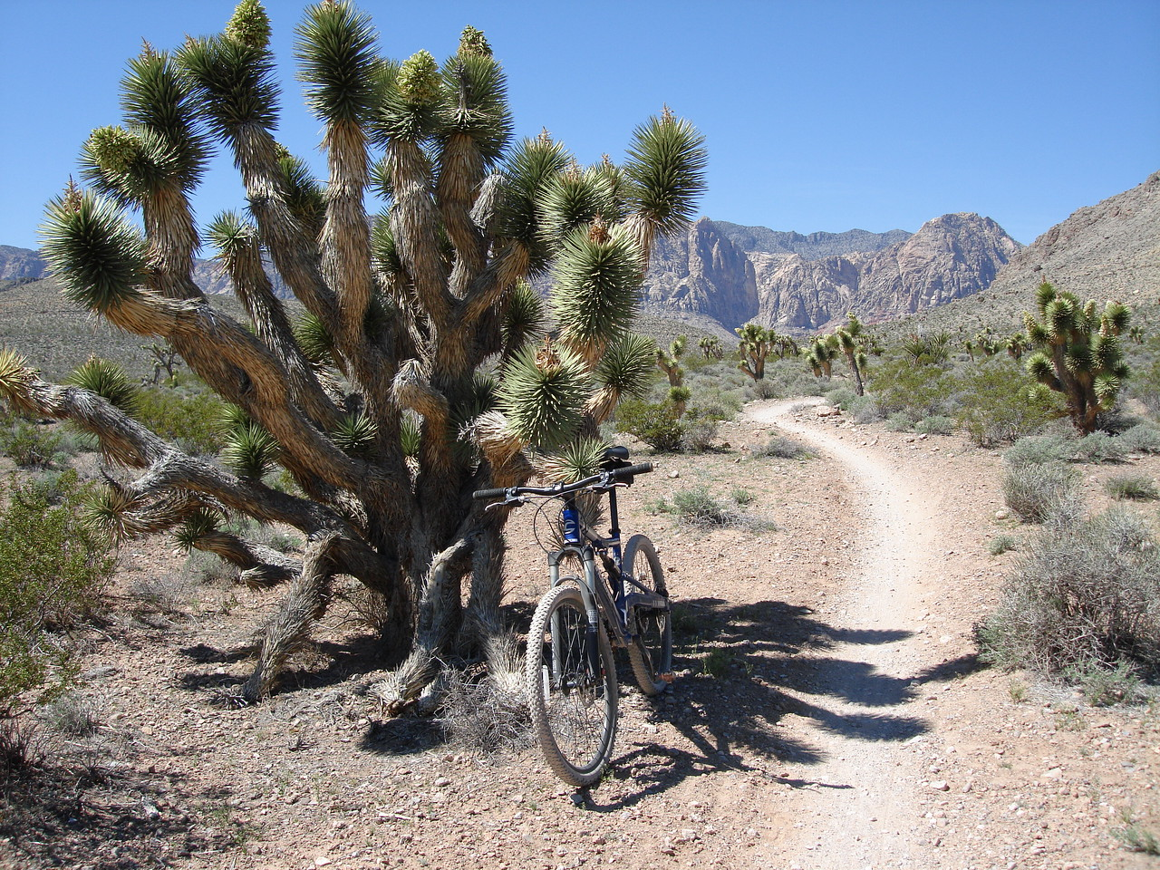 Joshua Tree - On my way back to catch up the group.