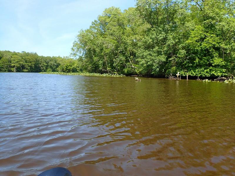Pocomoke State Park, MD, entering the River.