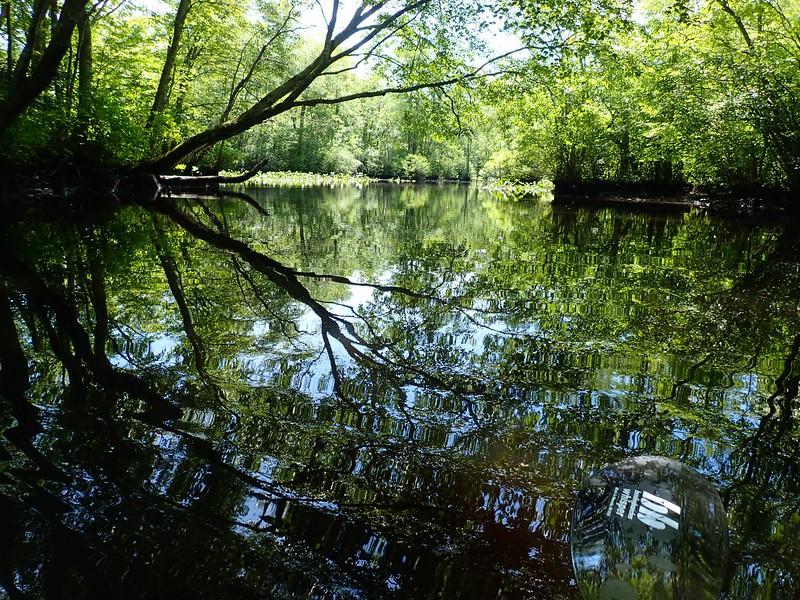 Pocomoke State Park, MD, Kayaking the creek heading to the Pocomoke River.