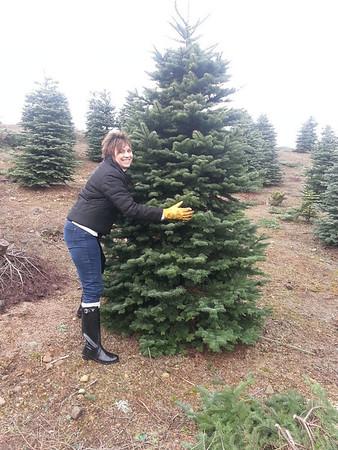 Christmas Tree Hunt @ The Alpine U Cut Tree Farm - December 2013
