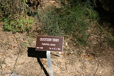 Boyce Thompson Arboretum Arizona February 2007