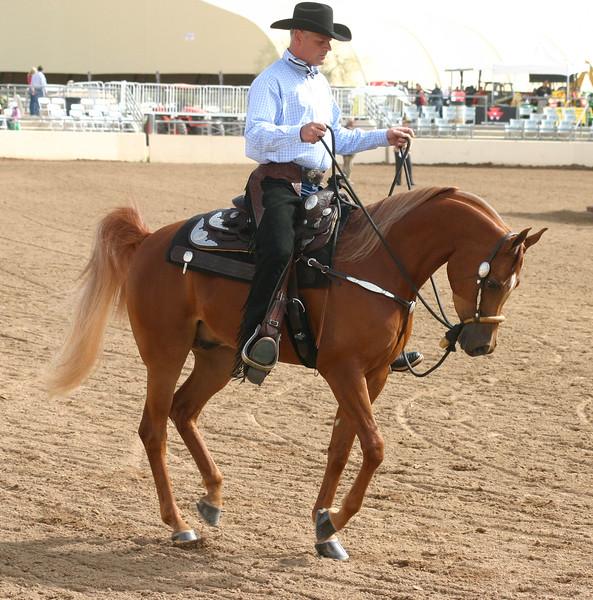 Arabian horse show007