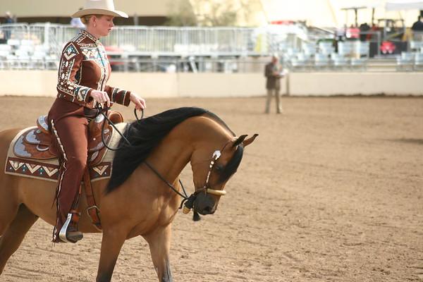 Arabian horse show011