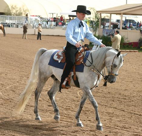 Arabian horse show004