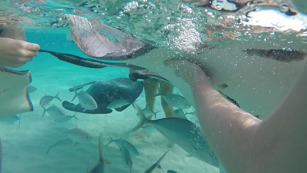 Cayman Islands August 2018