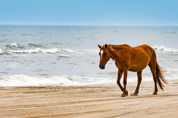 OuterBanks-3051