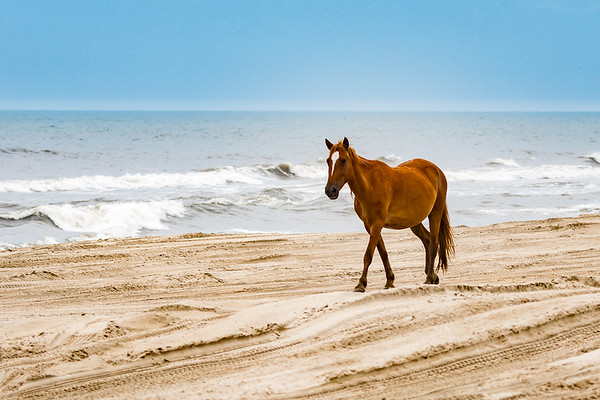 OuterBanks-3042