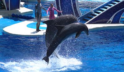Sea World Orlando Florida June2013