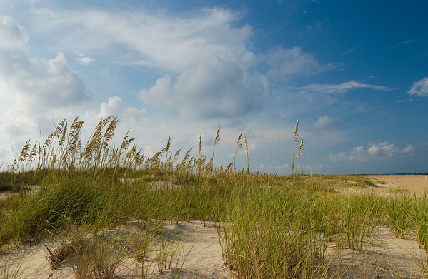 sea oats silvery sky avon beach dunes