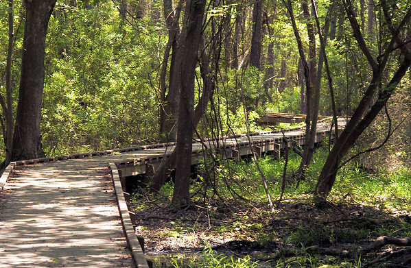 wooden path thru estuary