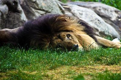 Boston Zoo