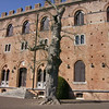 Real old hollow live tree @  Castello di Brolio
