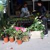 Farmers Market in Siena,  Melissa's Calla Lillies