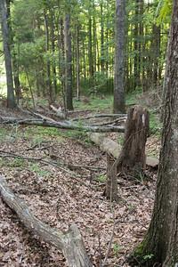 Geocaching Along the Natchez Trail