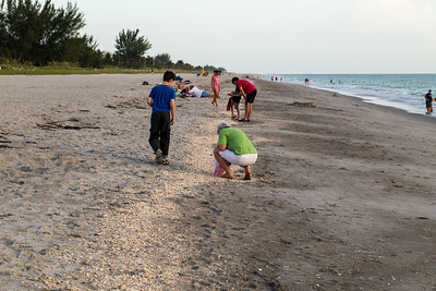 Looking for shells - a favorite pastime