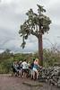 20 foot tall cactus