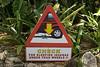 Don't squash our iguanas