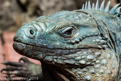 Blue Iguana nature preserve