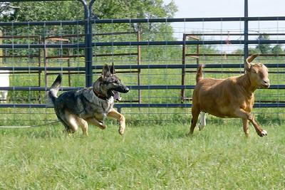 Yellowstone Dog Sports