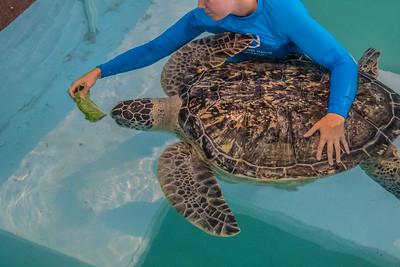 9-20-15 Clearwater Aquarium