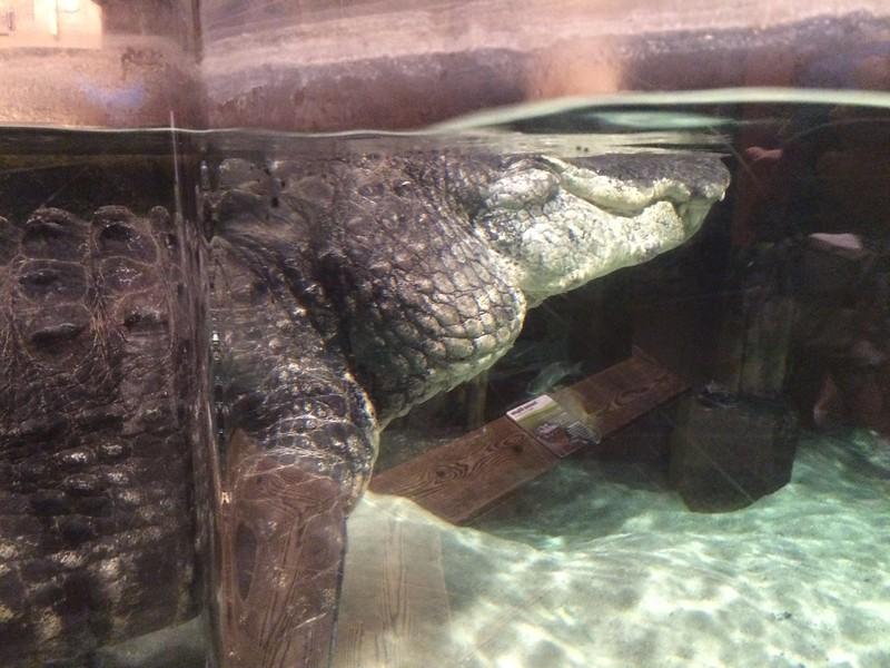 Visit to Newport Aquarium