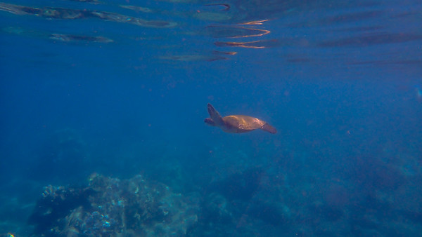 Day 7: Snorkeling Honolua Bay