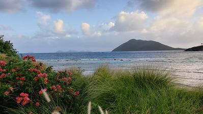 Nature shot from Scrub Island